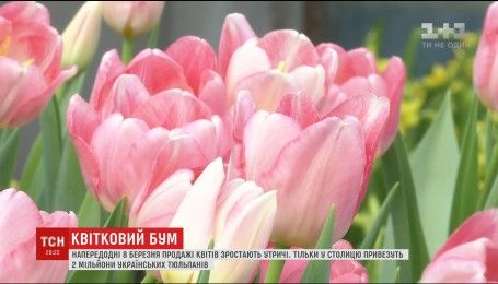 Від насінини до святкового привітання: у Києві триває квітковий бум