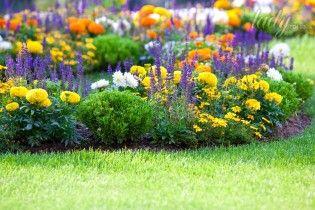 Як створити клумбу безперервного цвітіння