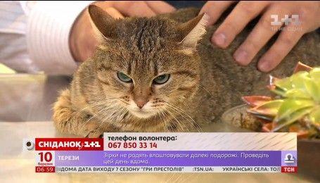Спокойная и уравновешенная кошка Дарси ищет семью