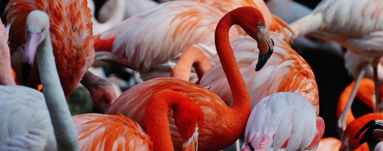 Незабываемое зрелище: розовые фламинго остановились отдохнуть на озере в Казахстане