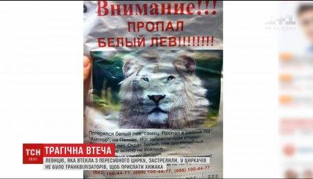 В Прилуках застрелили львицу, которая сбежала из цирка