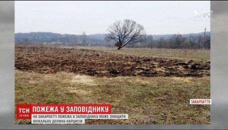 На Закарпатье пожар в заповеднике может уничтожить уникальную долину нарциссов