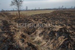 В унікальній Долині нарцисів на Закарпатті сталася пожежа