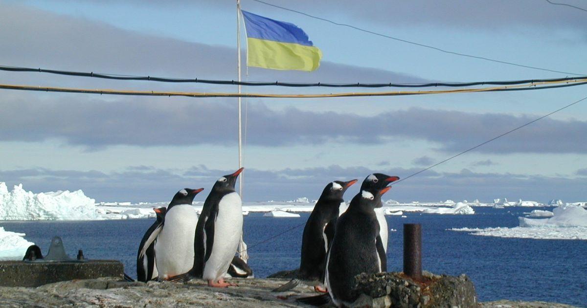 Обжалование тендеров срывает экспедицию украинских ученых в Антарктиду