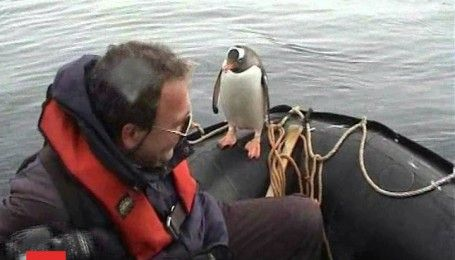 Пингвин спасся от косаток, запрыгнув в лодку полярников