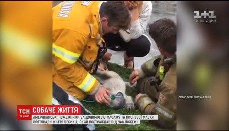 Американские пожарные вернули к жизни щенка, пострадавшего во время пожара