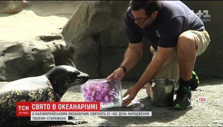 У каліфорнійському океанаріумі відзначають 21-ий день народження тюленя