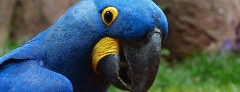 """""""Иди нах*й"""": в Лондоне сбежавший попугай признался в любви, а потом обматерил пожарных"""