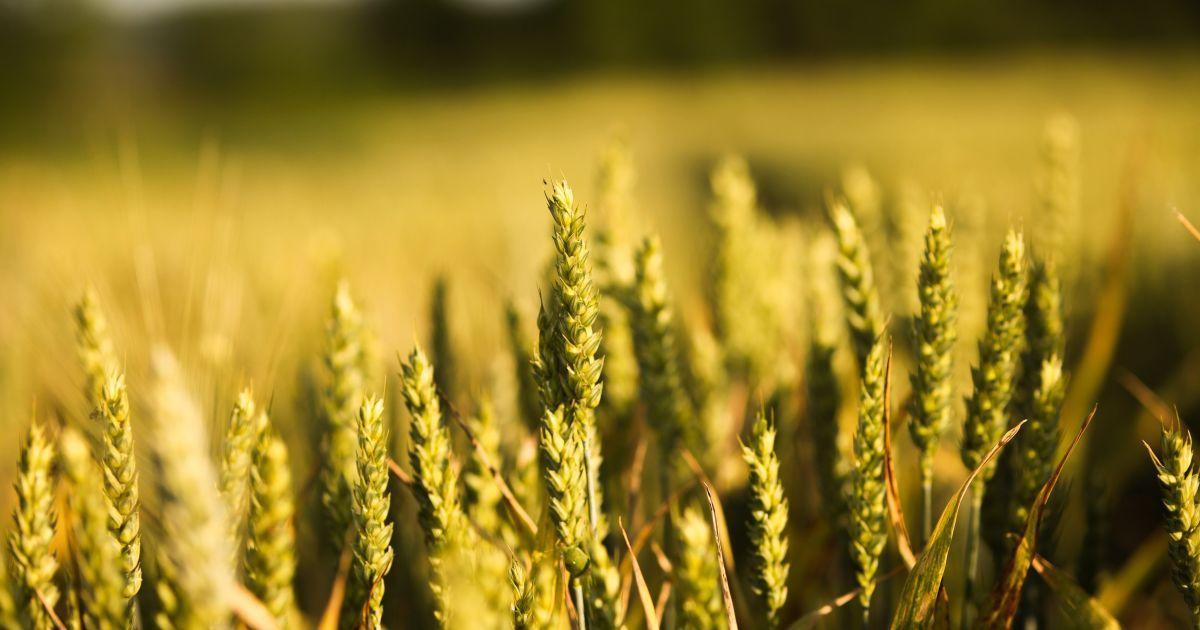 Украина начинает беспошлинно экспортировать в ЕС большие объемы некоторых овощей и меда