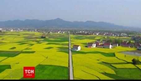 Весна в Китае: тысячи гектаров рапса превратили в произведение искусства