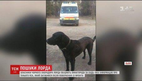 У Львові шукають легендарного чорного лабрадора, який допомагав рятувати поранених на війні