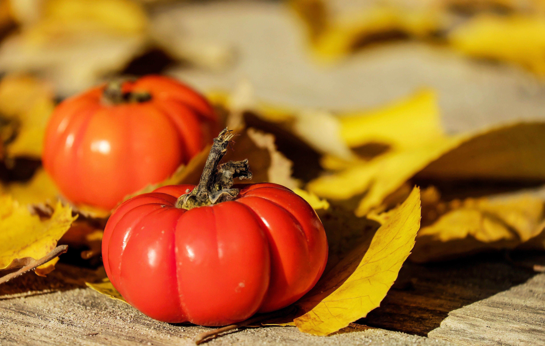гарбуз, осінь