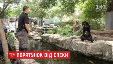 У зоопарку Бангкока аби врятувати від спеки тварин, їх годують холодними фруктами