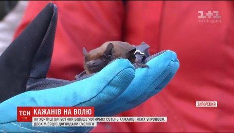 У Запоріжжі випустили на волю колонію кажанів, яких знайшли в одному з будинків