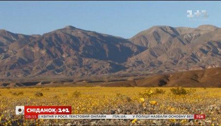 Пустыня в Калифорнии покрылась невероятным цветением