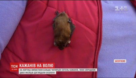 На Хортиці випустили на волю понад чотири тисячі кажанів