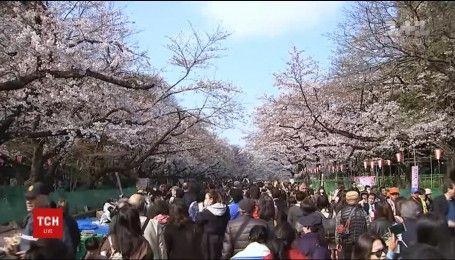 У Японії люди насолоджуються цвітінням сакури