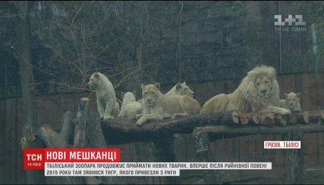 У Тбілісі зоопарк, який постраждав від повені, приймає нових мешканців