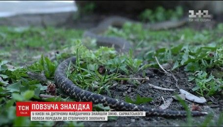 В Киеве обнаружили редкостную змею на детской площадке