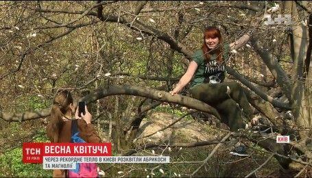 В парках столиці рання весна змусила розквітнути дерева