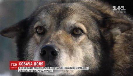 В Україні ухвалили закон про кримінальну відповідальність за жорстоке поводження із тваринами