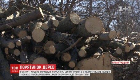 На Кіровоградщині масово вирубують дерева, які спеціально висаджували селяни