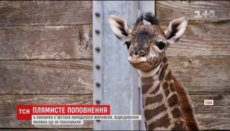 В зоопарке Хьюстона родился жирафенок