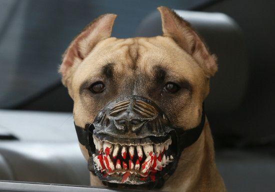 У Рівному зграя собак тероризує цілий район міста