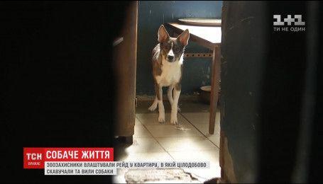 Зоозащитники устроили рейд в квартиру, в которой постоянно скулили собаки