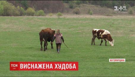 На Житомирщине 73-летняя хозяйка заморила голодом своих коров