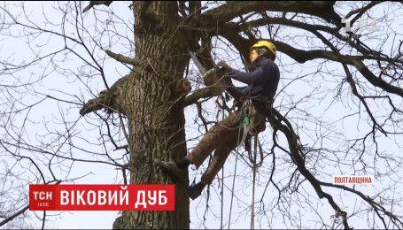 Вековой дуб на Полтавщине разрушает хозяйство местных