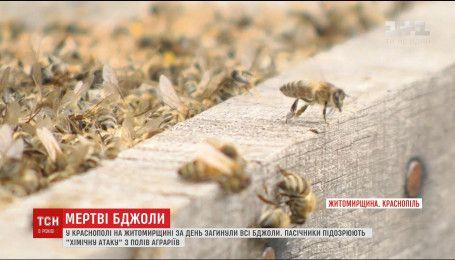 За добу всі бджоли пасічників на Житомирщині раптово вимерли