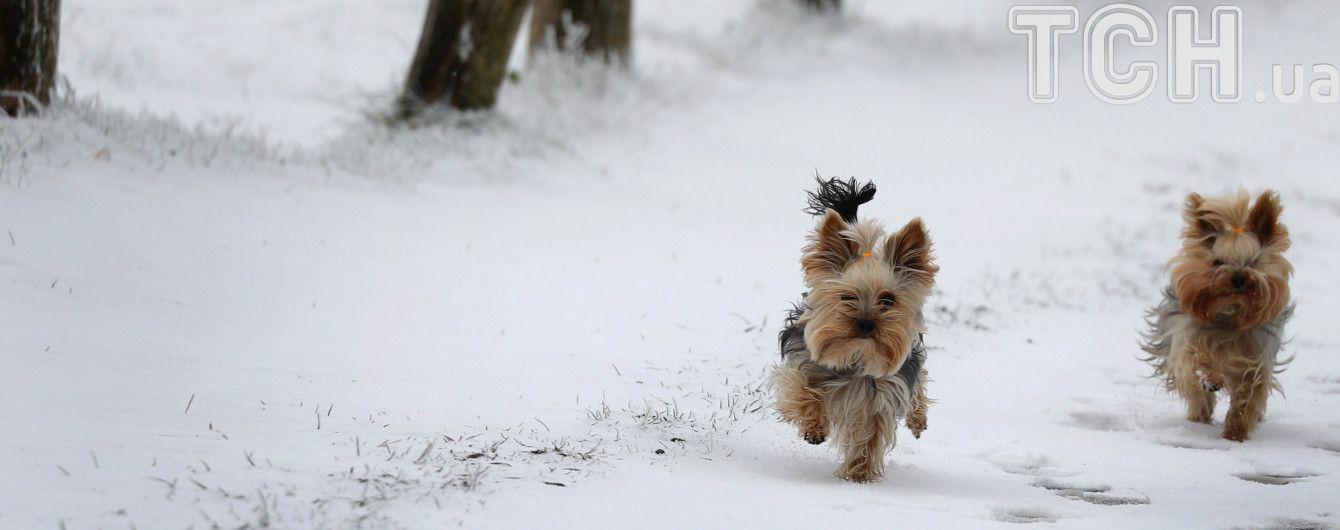 Синоптики рассказали, когда в Украине выпадет первый снег