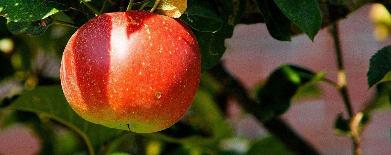 """""""Красна ціна"""": чому не вродили українські яблука і коли чекати подорожчання"""