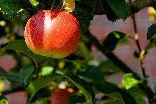 """""""Красная цена"""": почему не урожай на украинские яблоки и когда ждать подорожания"""