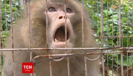 Взбешенная обезьяна ворвалась в кафе в Китае