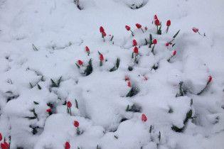 Снежный армагеддон добрался до Одесской области