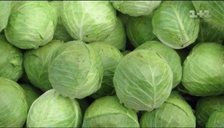 В Україні стрімко дешевшає молода капуста