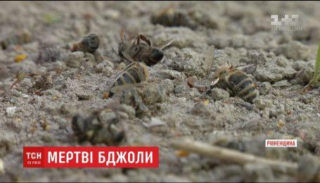 Селяне обвиняют агрофирму, которая кропила поля, в гибели пчел и плохом самочувствии детей
