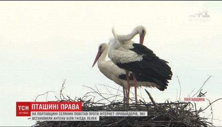 На Полтавщині чоловік повстав проти провайдерів, після встановлення ним антени біля гнізда лелек