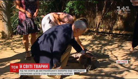 Спящего кенгуру разбудили, чтобы вице-президент США мог его покормить