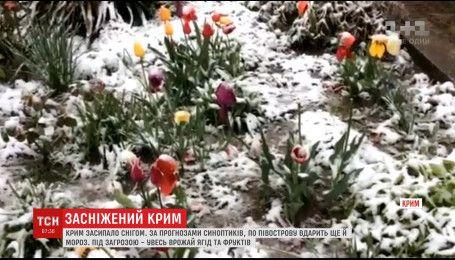 Крим засипало снігом