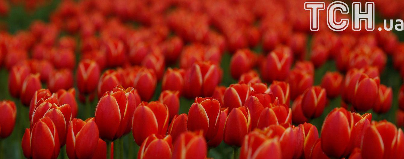 Озброєні чоловіки на іномарці відібрали ящик тюльпанів у квіткаря в Кропивницькому