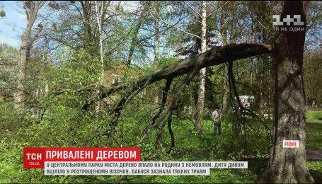 На жінок з немовлям впало дерево посеред центрального парку Рівного