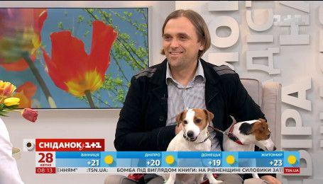 Владелец джек-рассел-терьеров рассказал все о собаках этой породы