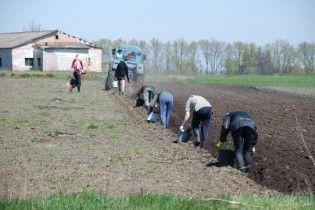 Скасування мораторію на продаж землі: скільки гектарів і кому можна буде придбати