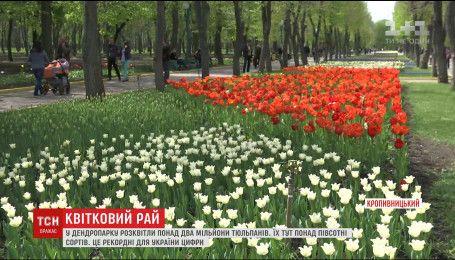 В Кропивницком расцвели более двух миллионов тюльпанов