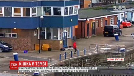 Камеры зафиксировали сцену трогательного спасения животного в Лондонском речном порту