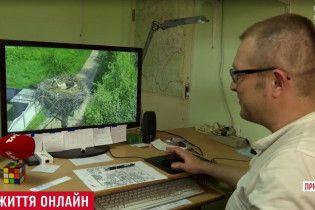 """В інтернеті набуло популярності """"онлайн-реаліті"""" з гнізда лелек на Прикарпатті"""