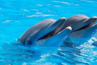 Во Франции запретили держать дельфинов в неволе